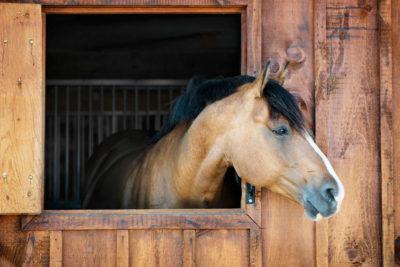 Casette in legno per animali: scelta d'amore