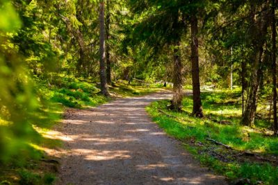 Abete nordico per casette in legno: i vantaggi